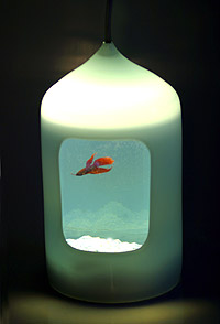 fish-light.jpg